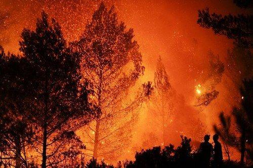 Banff Forest Fire