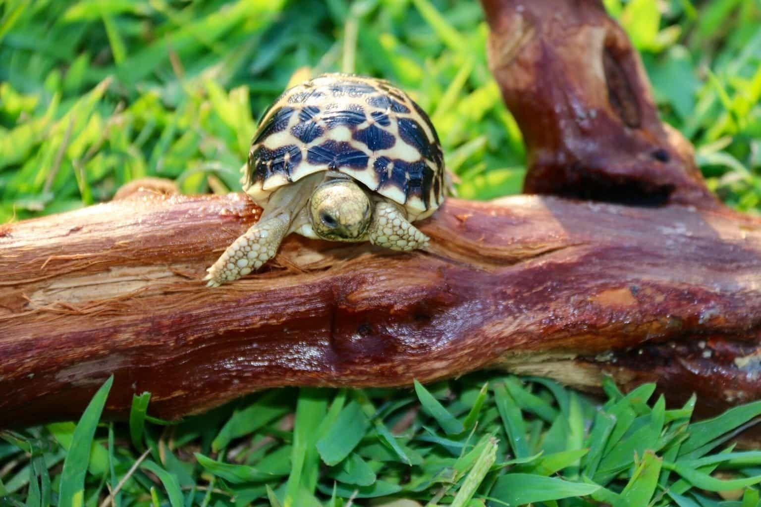 Pin on Tortoises & Turtles