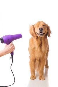top 10 best pet dryers for dogs dog baths washtubs and dog rh pinterest com
