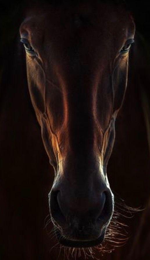 ✥✰✥ PORTRAIT OF A HORSE ✥✰✥ 💛💛❧