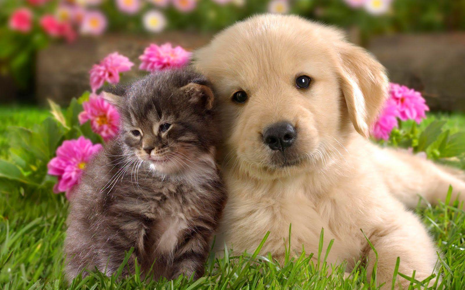 Resultado De Imagen Para Imagenes De Perritos Y Gatitos