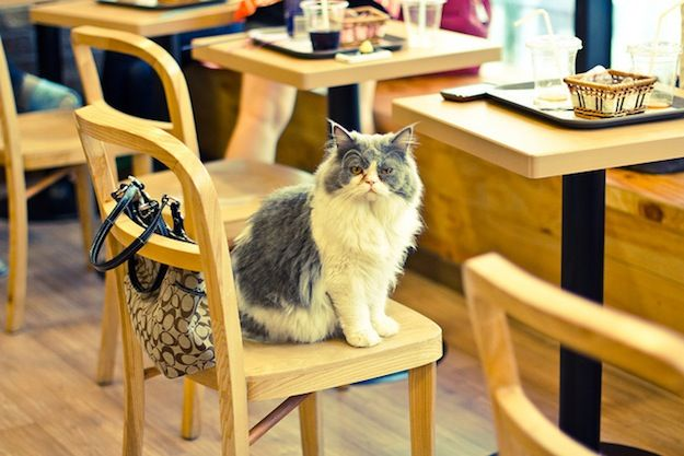 help london get its own cat cafe cats n chairs pinterest rh pinterest com cat sitting in a chair