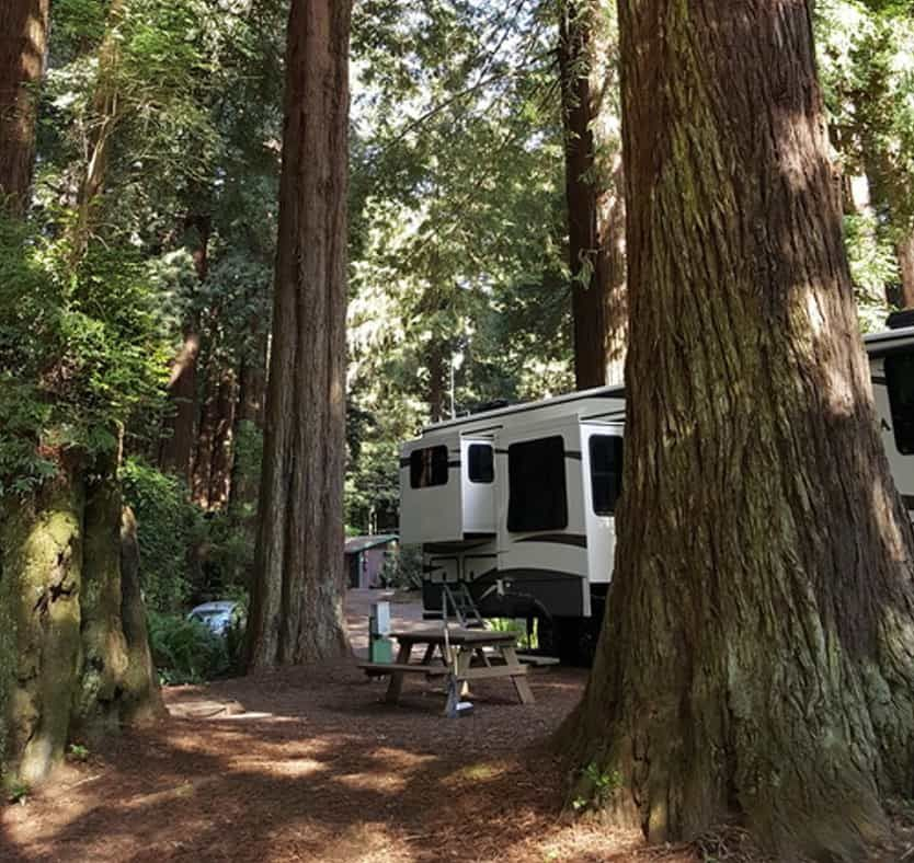 Account Suspended Forest Cabin Rv Parks Forest