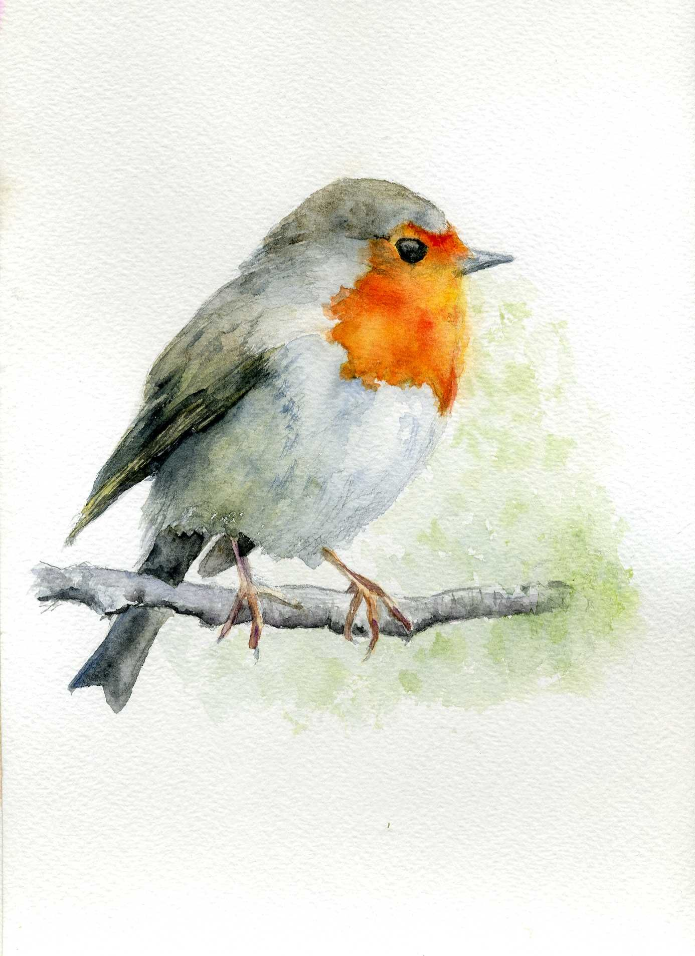 Dibujar Pajaros Buscar Con Google Watercolor Bird Watercolor