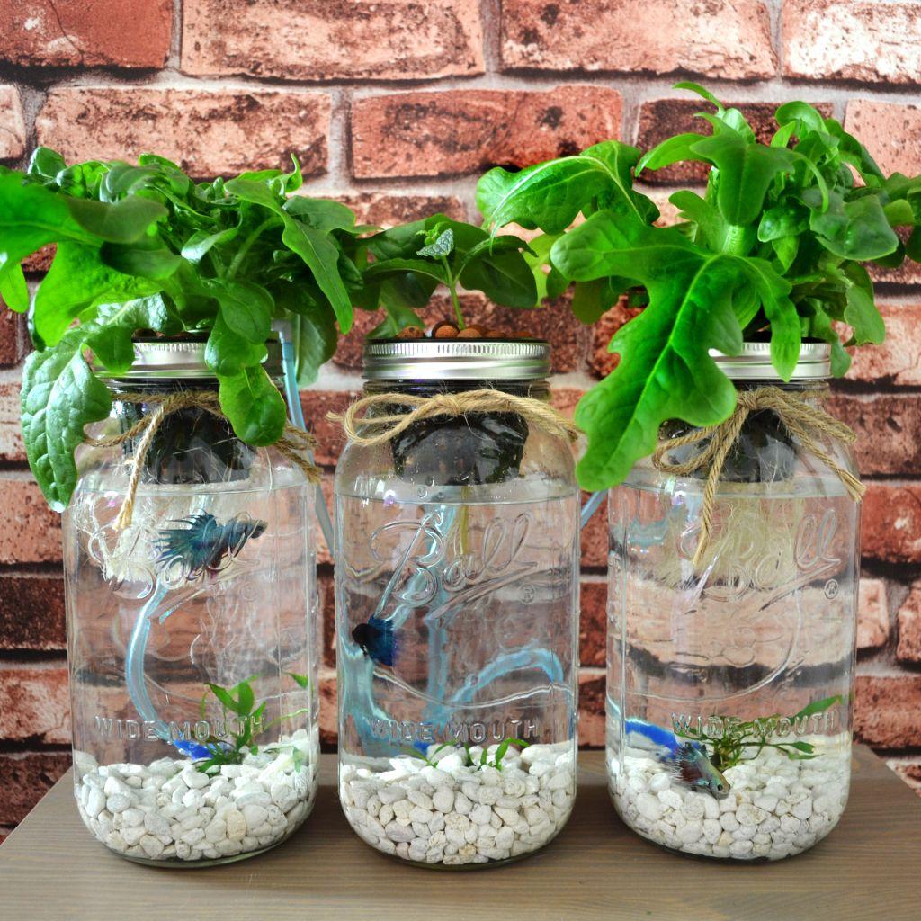 mason jar aquaponics kit build your own hydroponics herb garden