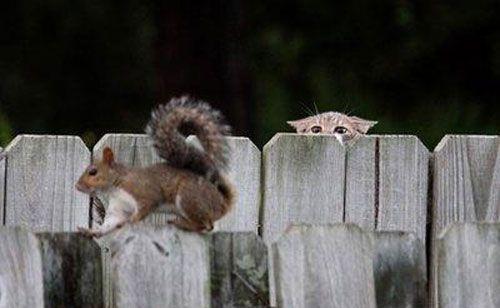 POPHANGOVER » Blog Archive » 18 Hilarious Animal Photobombs