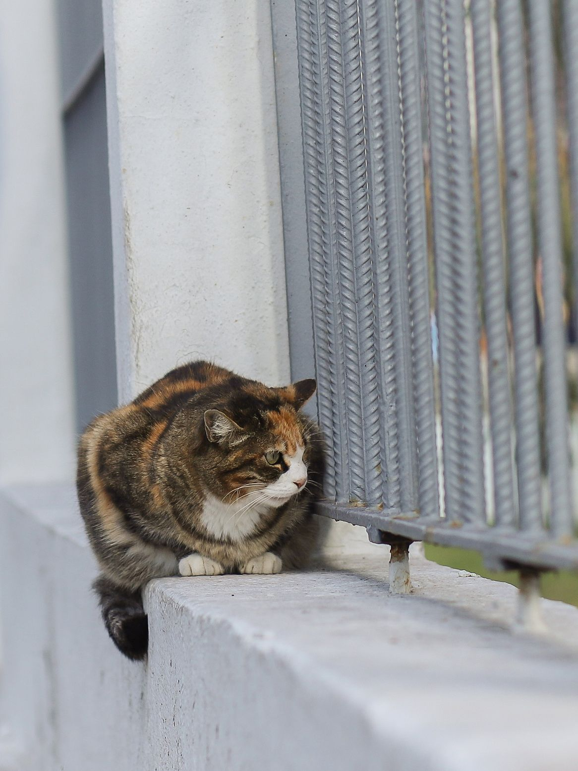 Stray cats at Istanbul/Turkey Cats, Stray cat, Animals