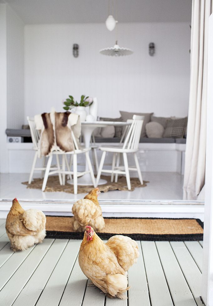 cosy designs for chicken houses. White interiors look great in coastal cottages  shabby chic rooms classic contemporary this farm house design The chooks set the scene even better ikea docksta ronde tafel spaces things Pinterest Ikea
