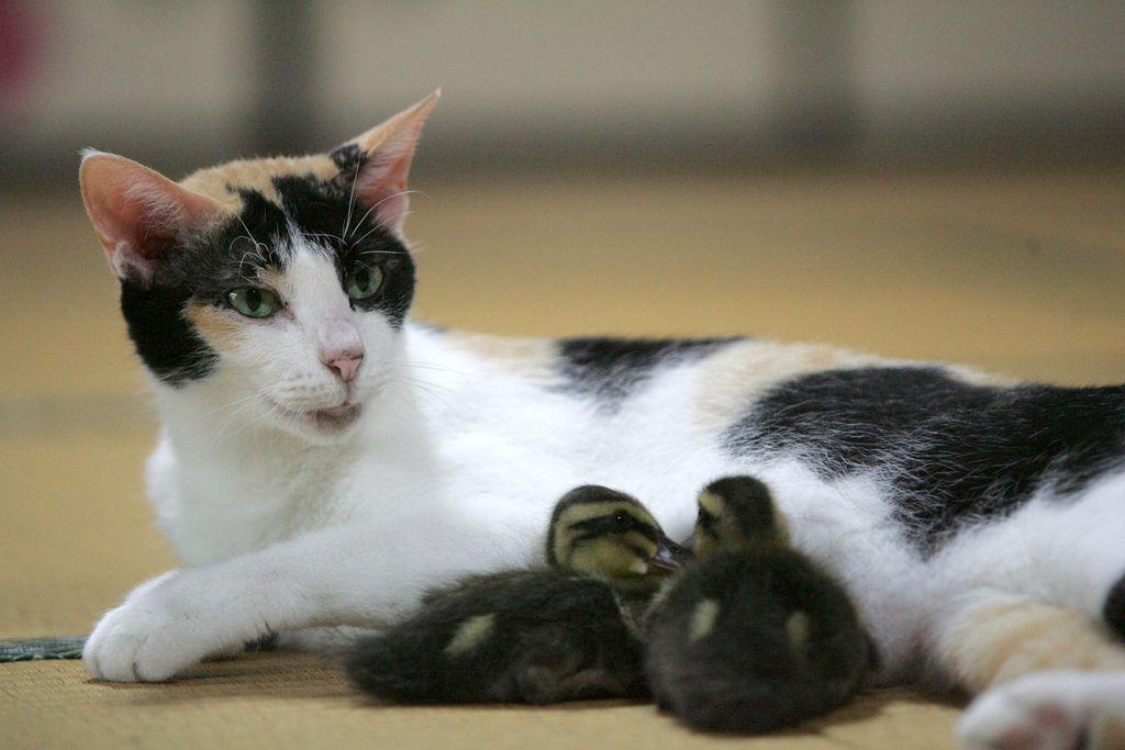 <b>Às vezes é preciso que os animais nos lembrem de como sermos humanos.</b>