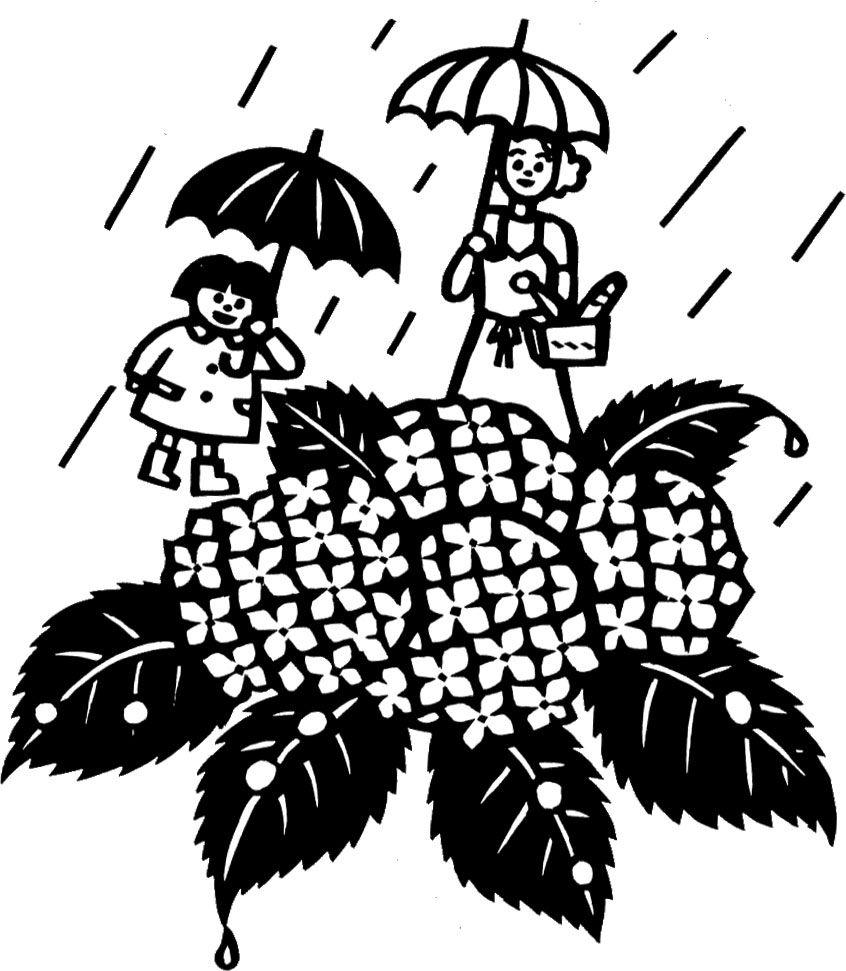 画像サンプル-白黒あじさい | 紫陽花・あじさい・hydrangea