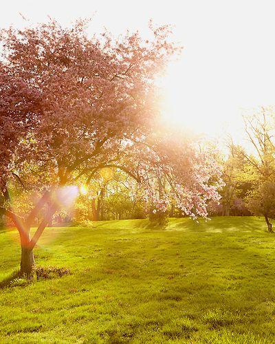 Gleaming Glory, Nature Photography