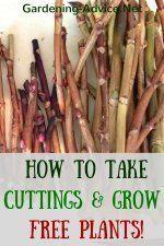 Greenhouse Gardening Tips #gemüsegartenanlegen