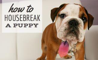 Help How Do I Housebreak My Puppy Training Your Puppy