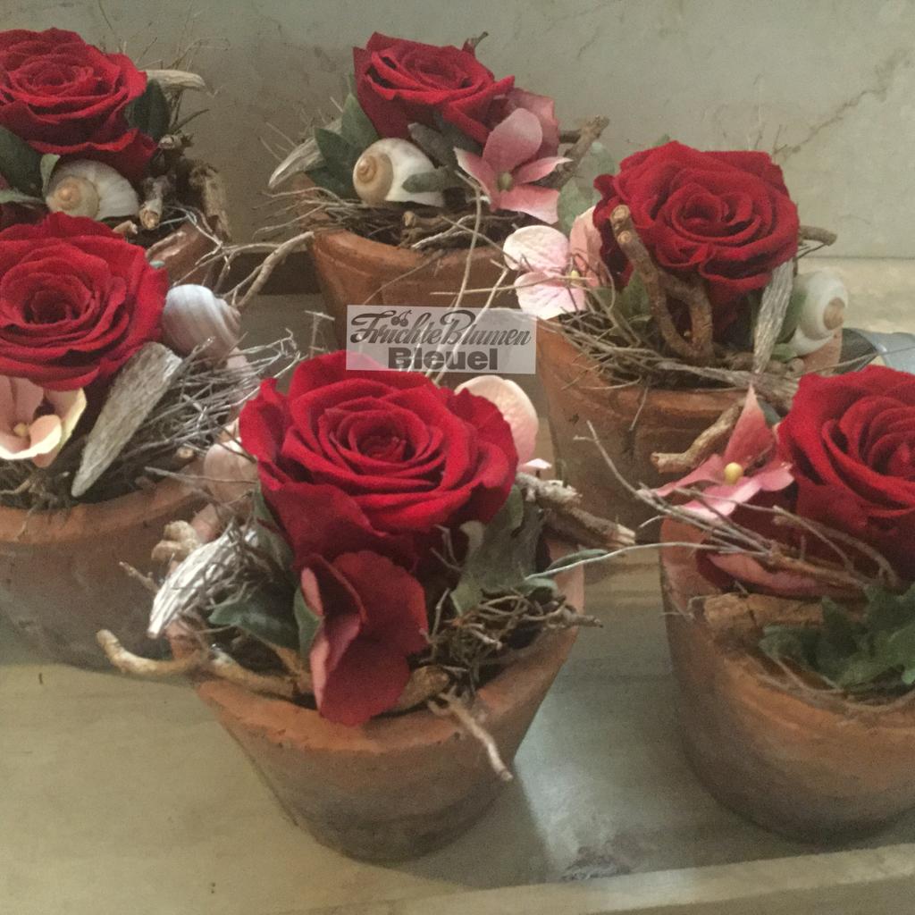 Blumenarrangement gefriergetrocknete Rose / Bleuel Antweiler