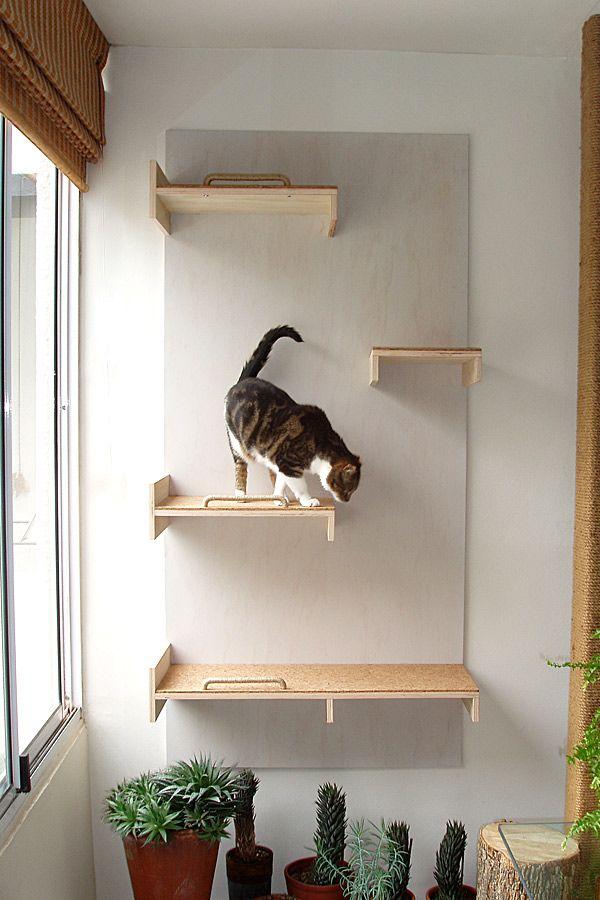 так выглядит полки на стену для кошек фото поделки своими
