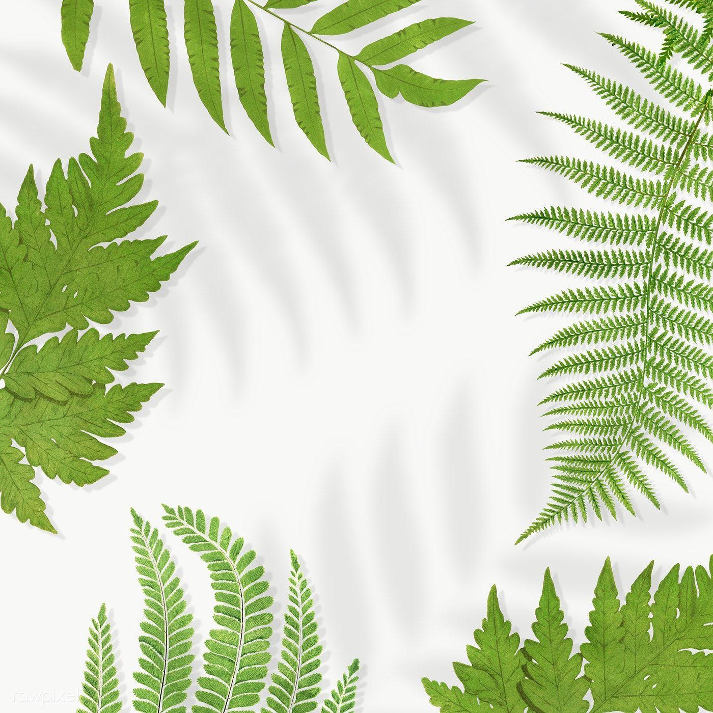 Download Premium Png Of Frame Of Fern Leaves Transparent Png 2251141 Flower Illustration Leaf Illustration Leaf Background