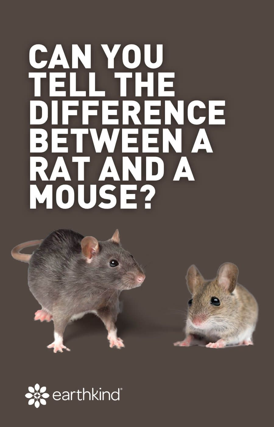 Rodent Identification The Difference Between Rats And Mice Pest Control Rats Pests