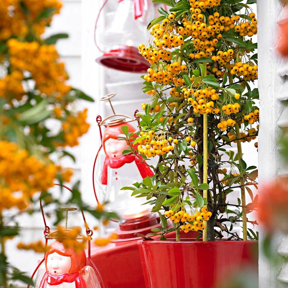 Pin On Sierheesters Jouw Tuin Balkon In Bloei