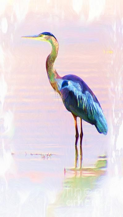a picture i took of a blue heron,then photo painted