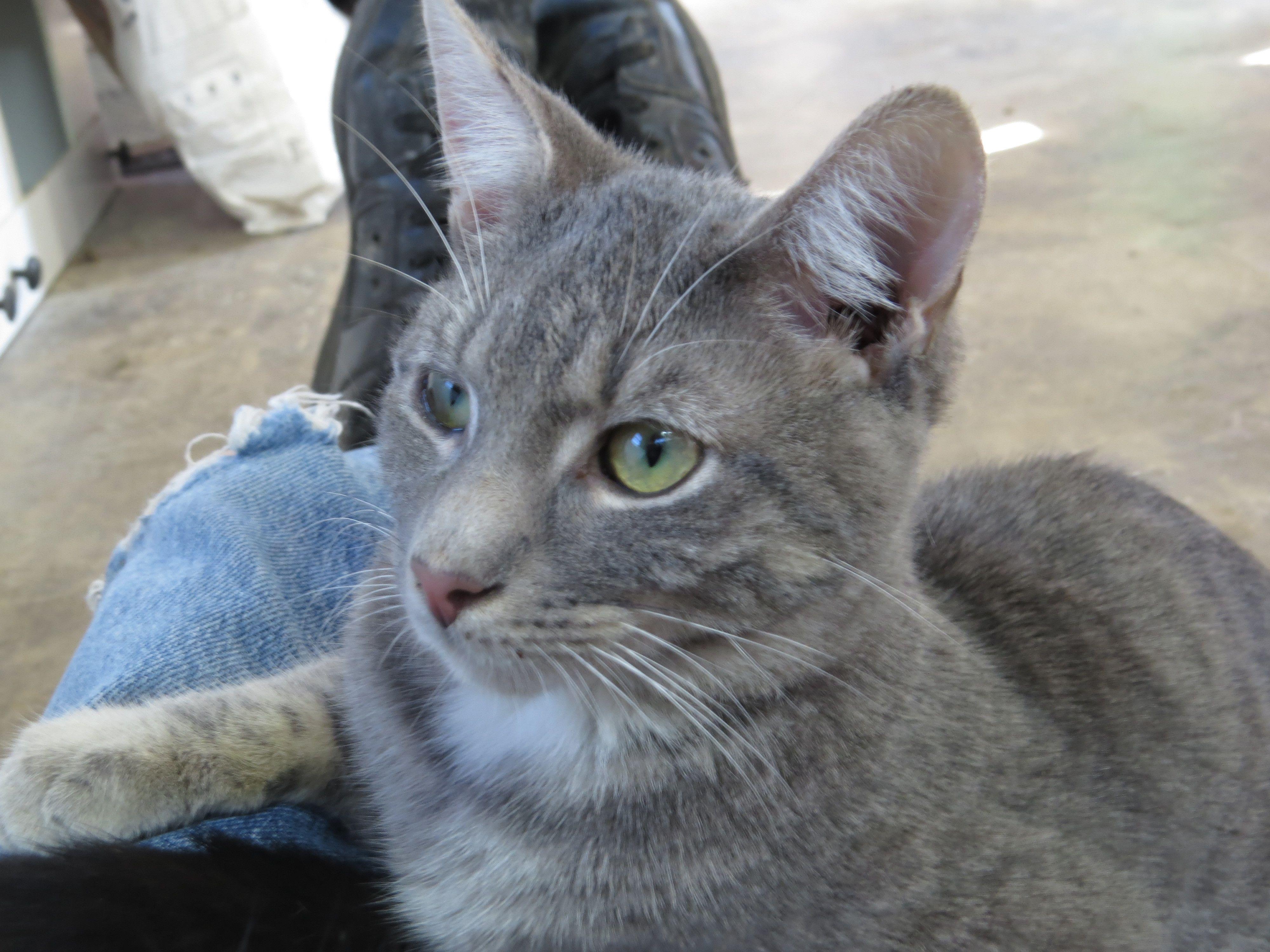 Adopt Kittens, kittens, kittens on Kittens, Animals
