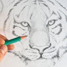 Apprendre dessiner un tigre avec le blog dessin cr ation dessin en 2019 animal drawings - Dessin de tigre facile ...