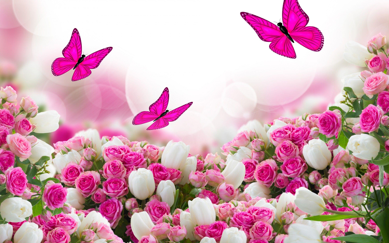Beautiful Flowers Pink Roses Wallpaper Zellox