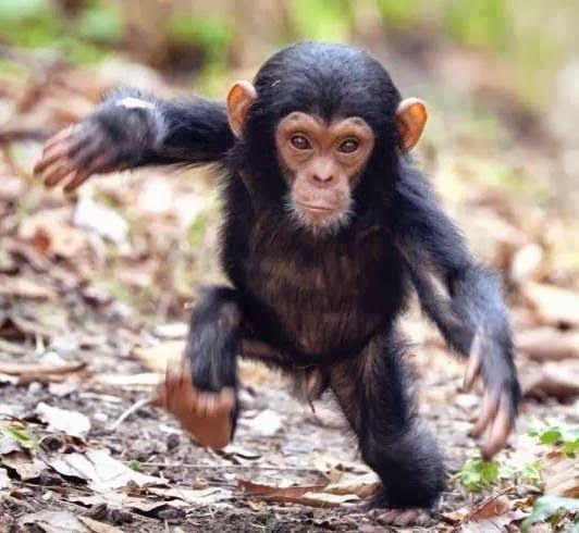 Animales Graciosos Bonitos Tiernosen Todas Sus Variedades Y Razas