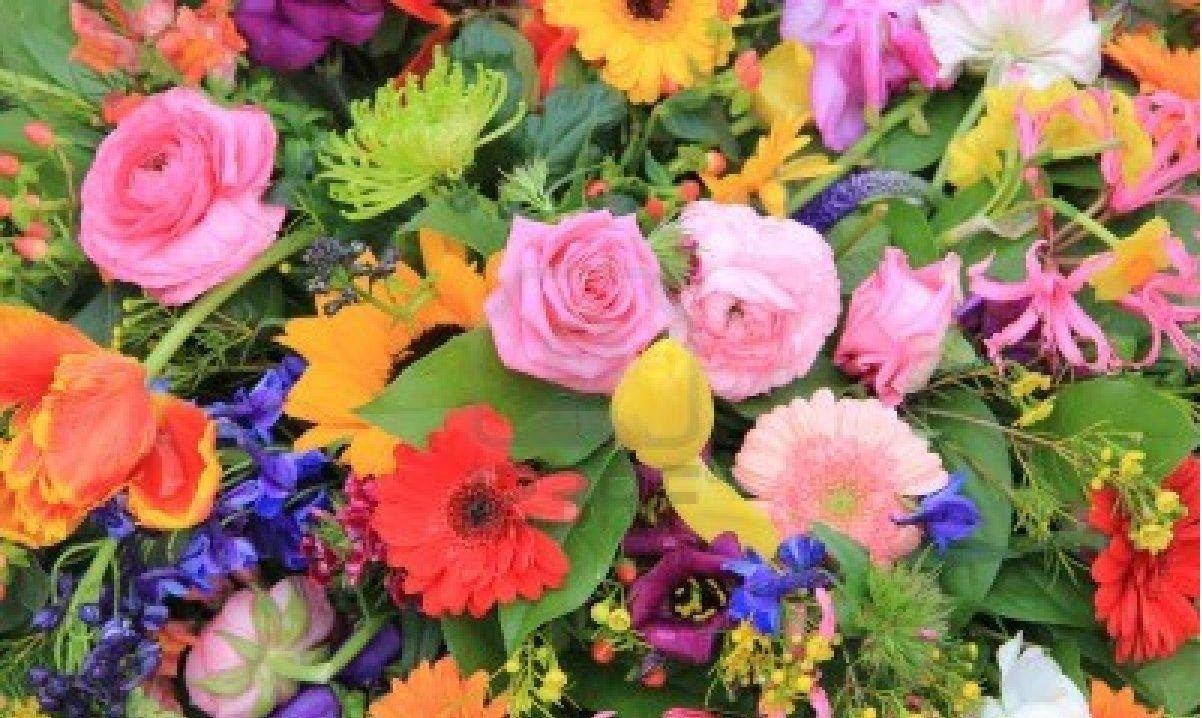 ورد ملون جميل Imagx Flowers All Flowers Floral Wreath