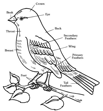 free worksheets of animals body parts of birds vocabulary printables in english for. Black Bedroom Furniture Sets. Home Design Ideas