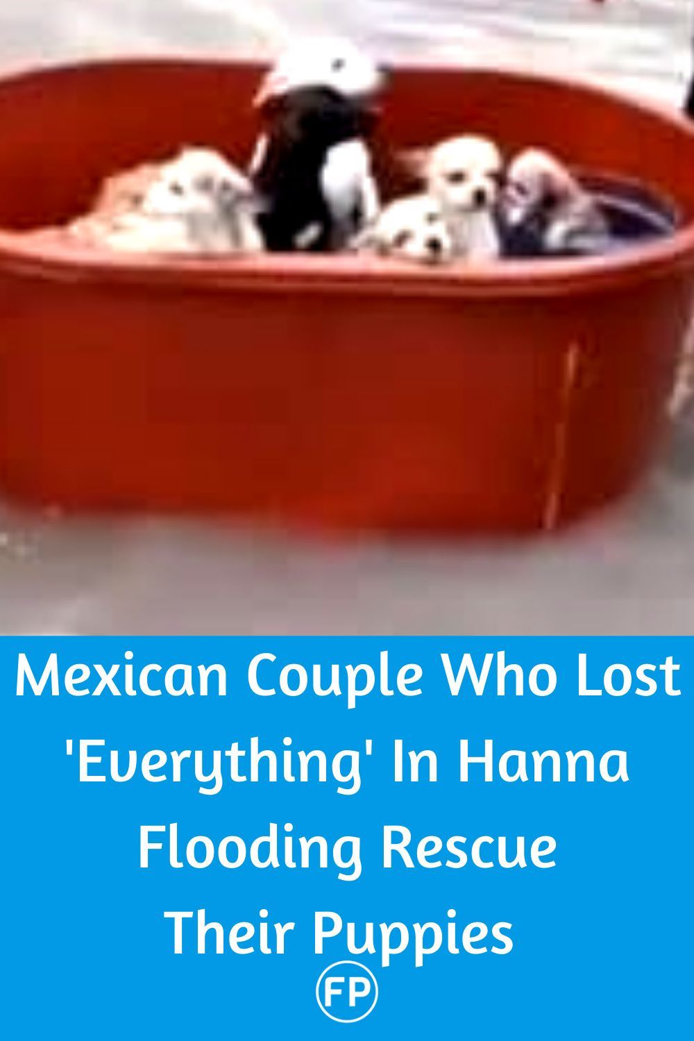 Mexican Couple Who Lost Everything In Hanna Flooding Rescue Their Puppies In 2020 Puppies Heartwarming Stories Couples