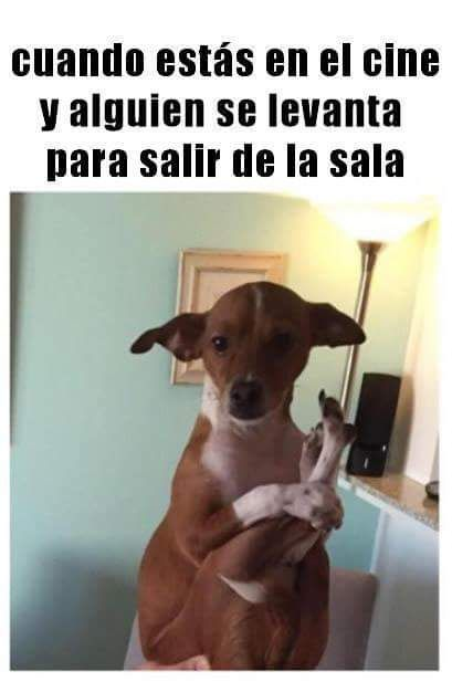 Pinche Desmadre Humor Frases Chistes Comunidad Google Funny Animal Memes Funny Animals Funny Animal Pictures