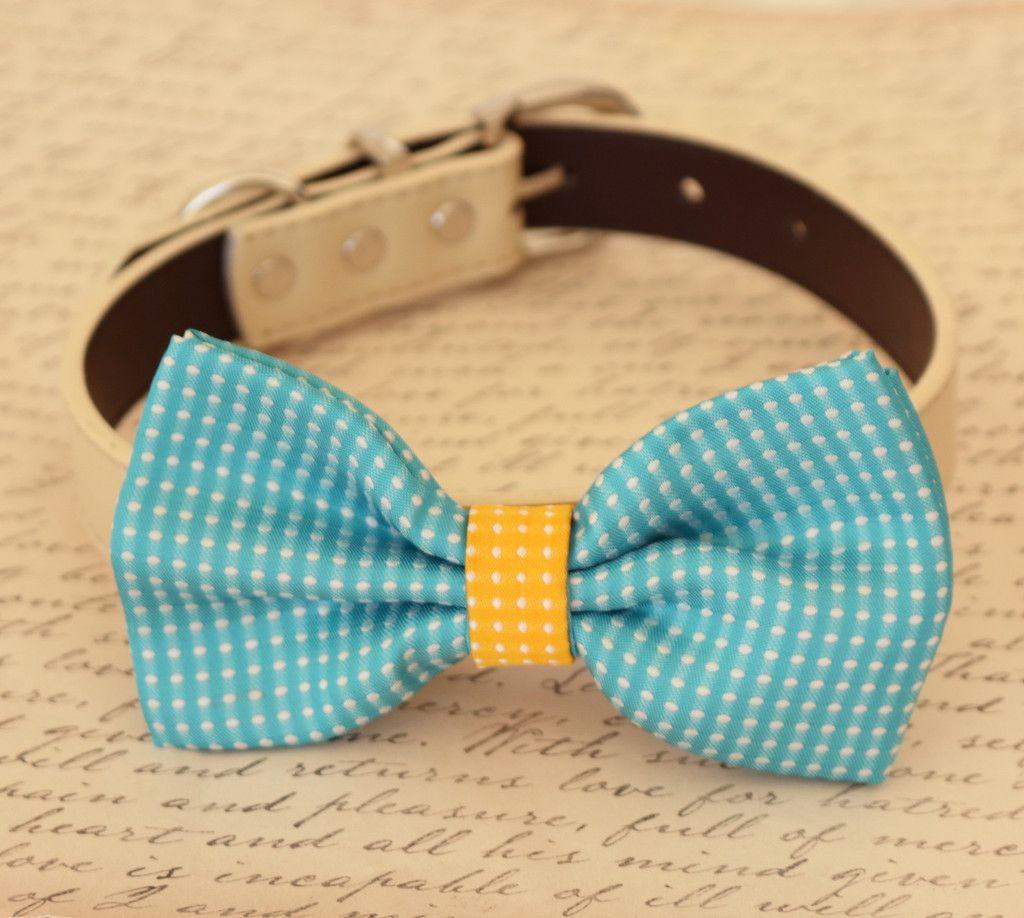 Blue dog bow tie, Bow attached to dog collar, Pet wedding accessory, some thing blue, dog birthday gift, dog collar, Blue, yellow,Polka dots