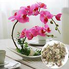 12LGarden Sphagnum Moss Moisturizing Organic Fertilizer für Orchid PhalaenoT ch Garten & Terrasse #hydratant