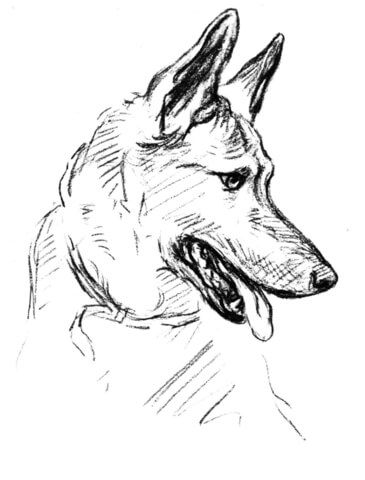 German Shepherd Dog Portrait coloring page from Dogs category ...