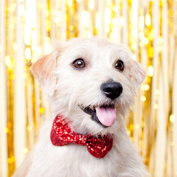 Red Dog/Cat Glitter Christmas Party Bow Tie by PupTartHandmade