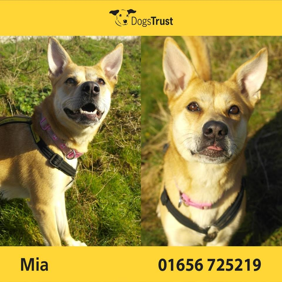 Mia Is A Bright Young Dog At Dogs Trust Bridgend And Full Of Fun She Loves Attention And Is Very Keen To Please She Can Be Worried Ar Dogs Trust Dogs