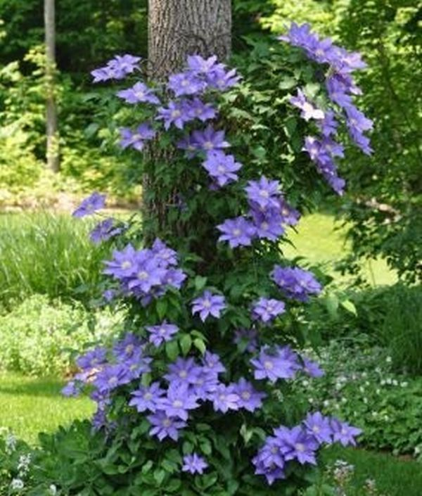 Flowers who loves shady places – ideas for arranging trees in yard