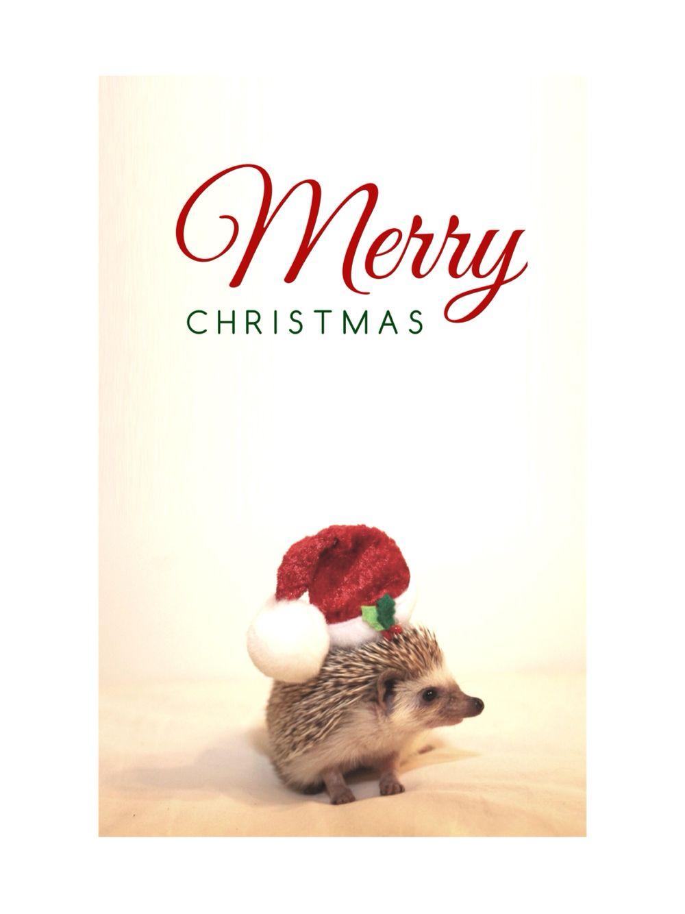 Hedgehog Christmas Wallpaper Hedgehog Christmas Christmas Wallpaper Merry Christmas