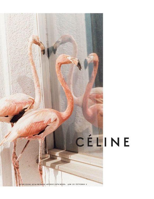 Celine Flamingos Instagram Ideer Billeder