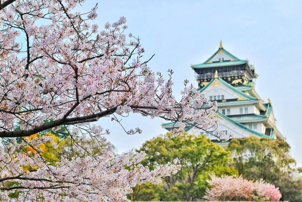 Perfect Osaka Castle Cherry Blossom Photo Spots Backpacking Japan Spring Travel Flashpacking Japan Japan Travel Photography Japan Travel Destinations Japan Travel