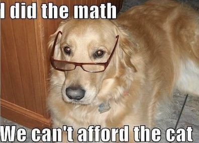 We can't afford the cat!