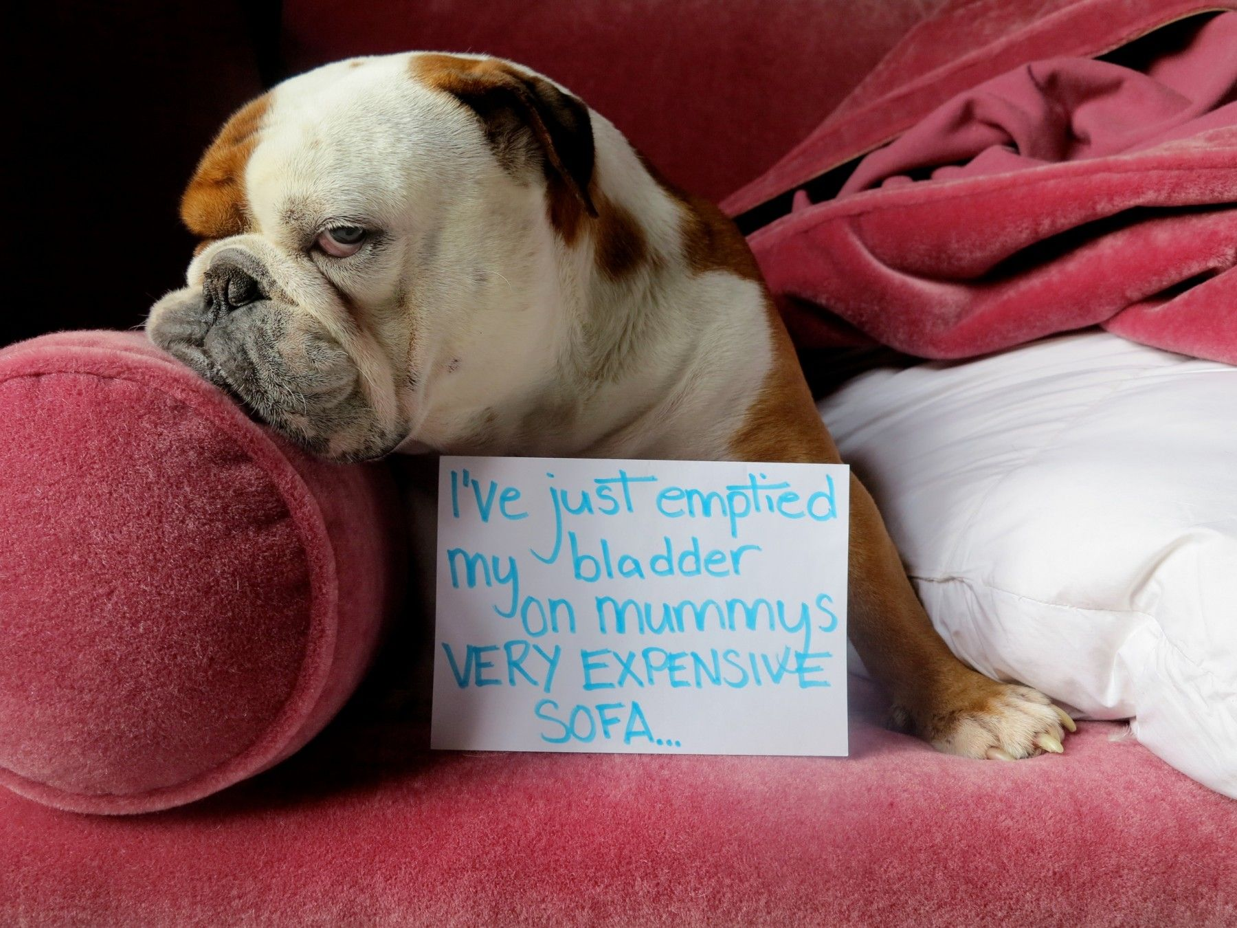 Dog Shaming 47 Park Avenue Dog Shaming Animal Shaming Dogs