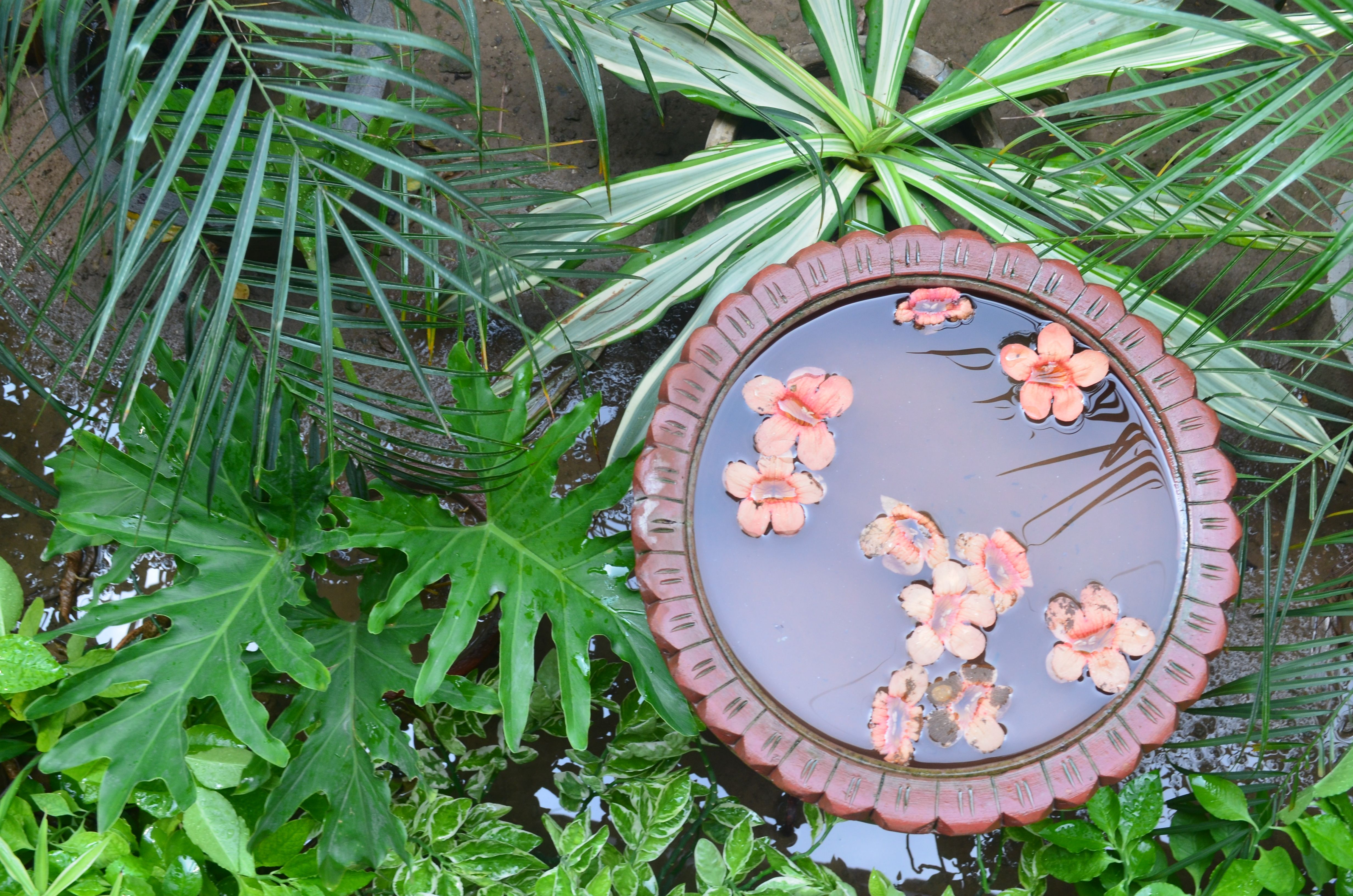 clay pond of trumpet vine.