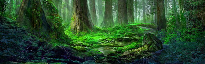 Deep Forest Background Forest Background