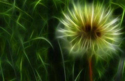 dandelion, flowers, abstract, art, blur, petals, green, dazzling, photography, artistic wallpaper