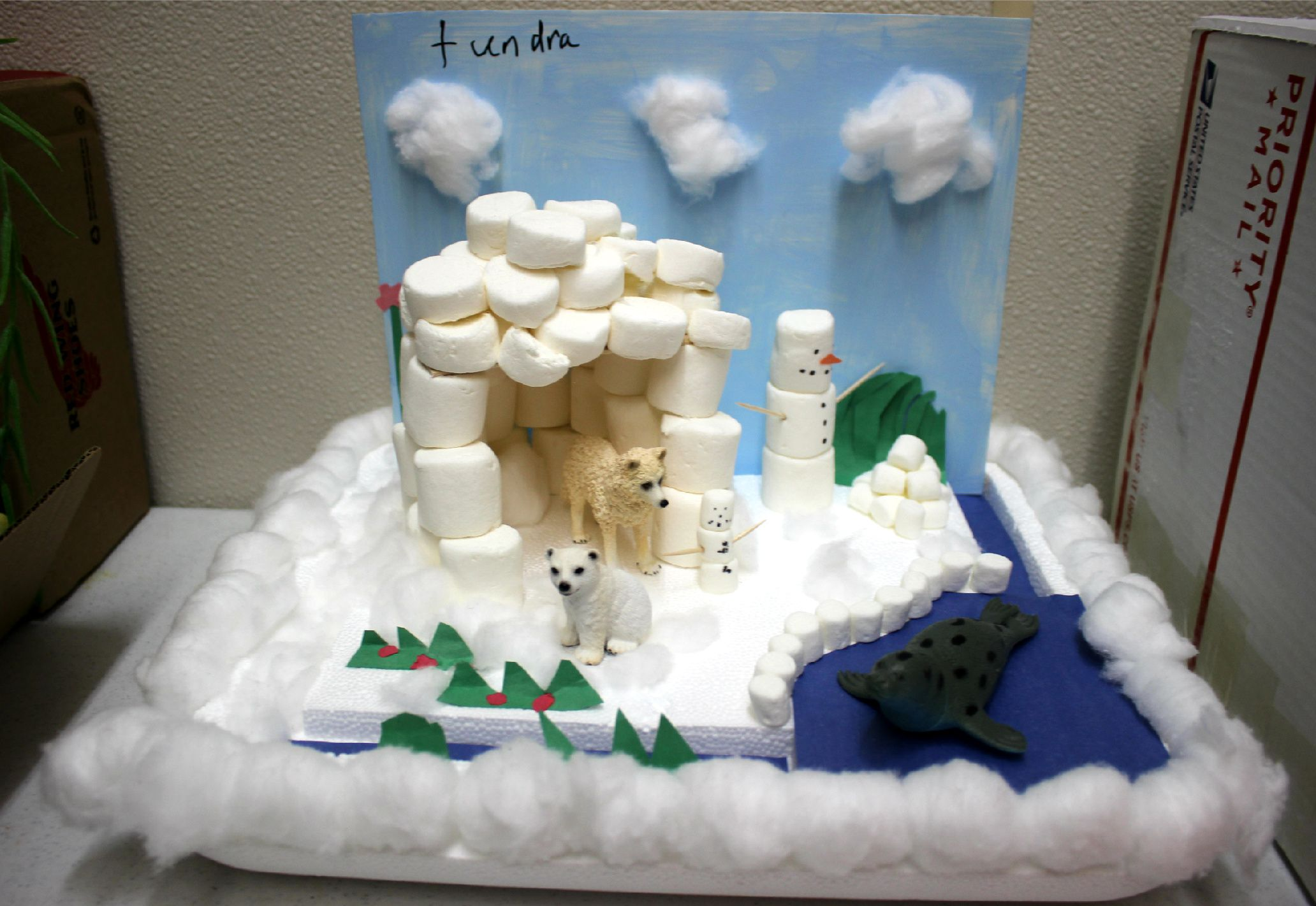 This fourth-grade biome project represents the arctic ...
