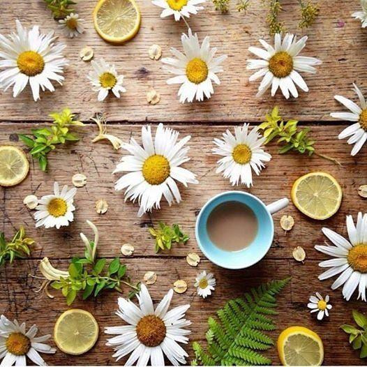 Se é para começar...bora começar... foto: @5ftinf #bomdia #goodvibes #start #vamoqvamo #coffee