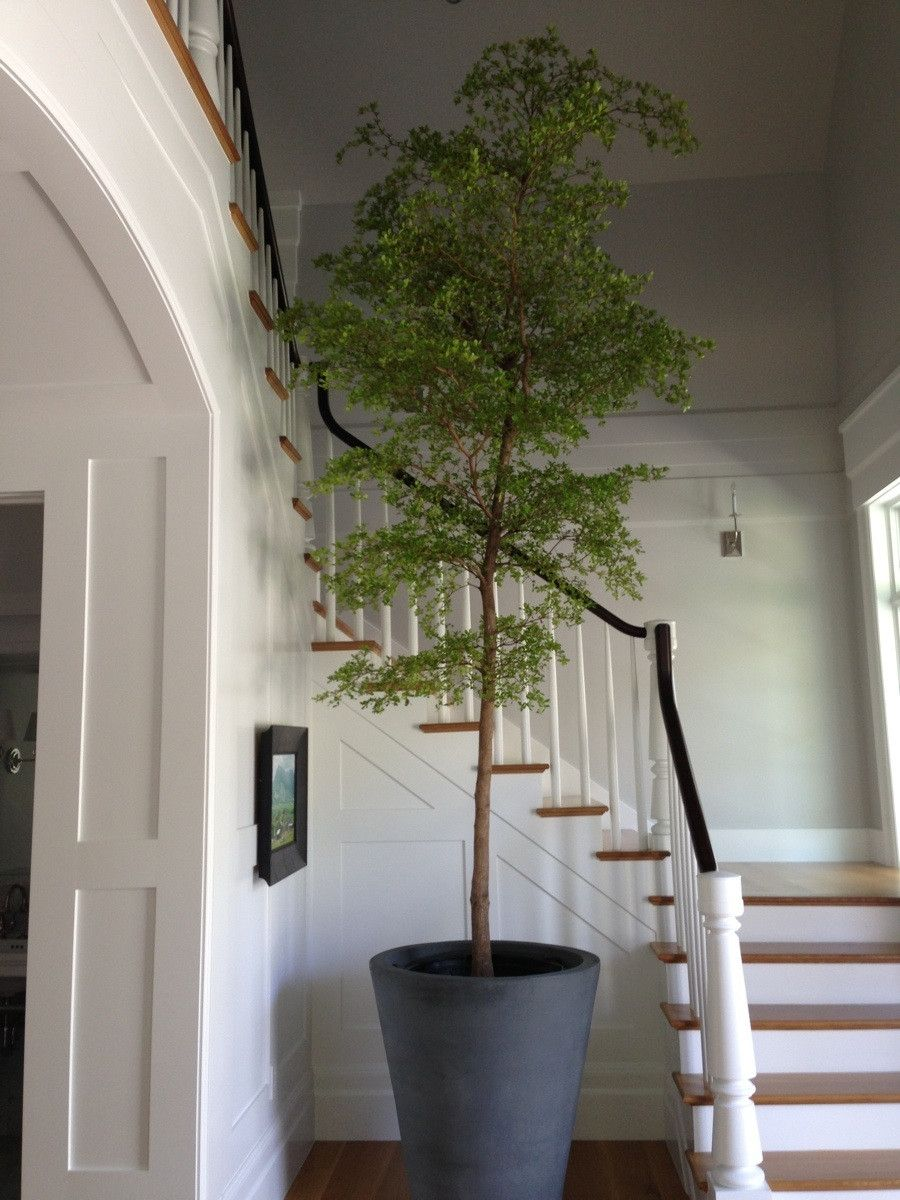 Biophilic design with indoor tree | Ideas for the House ...
