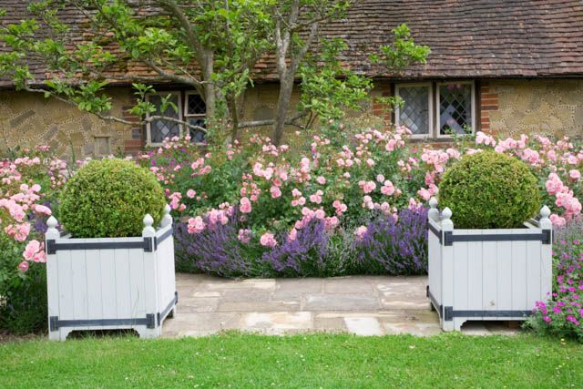 garden ideas border ideas path ideas hedge ideas lavender hidcote rose bonica lavandula angustifolia hidcote rosa bonica garden path lav