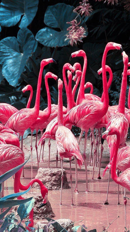 Photo of Flamingos // Tapete, Tierhintergrund iphone – #animalbackgroundiphone #Flam …